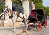 Horse carriage waiting for tourists in Old Havana — Stock Photo