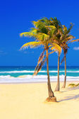 The beach in Cuba on a beautiful summer day — Stock Photo