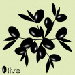 Black Olive — Stock Vector