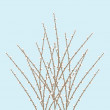 Stock Vector: Spring Willow Twig