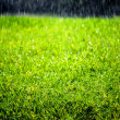 Raining on Green Lawn — Stock Photo