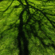 Tree Shadow — Stock Photo