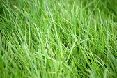 Césped verde enorme — Foto de Stock