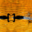 Duck Silhouetted on Golden Pond — Stock Photo