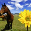 chevaux en champ avec fleur de printemps jaune — Photo