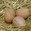 Stock Photo: Free range eggs