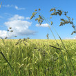 Stock Photo: Grass field