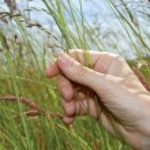Рука в траве — Стоковое фото