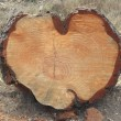 Heart log — Stockfoto
