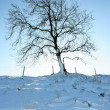 Tree in winter — Stok fotoğraf