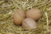 Free range eggs — Stock Photo