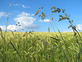 Grass field — Stock Photo
