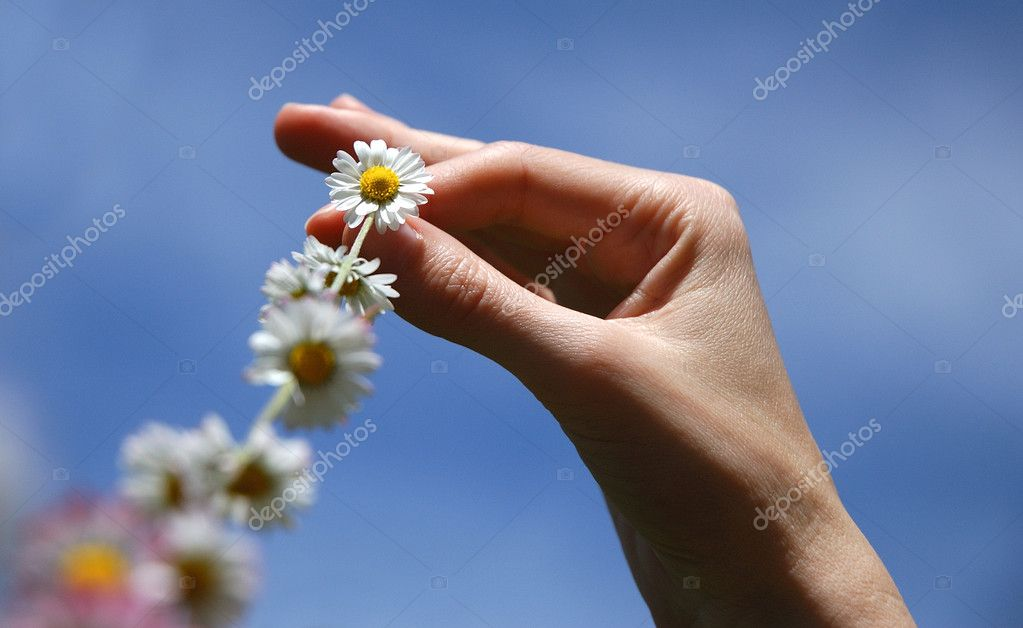 Chain of daisies against a clear blue summer sky — Stock Photo #8186693