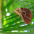 Butterfly on palm frond — Stock Photo #8509429