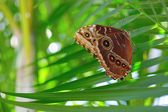 Butterfly on a palm frond — Stock Photo