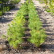 Tree Nursery — Stock Photo