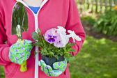 Pansy Gardener — Stock Photo