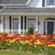 Tulip House - Stock Photo