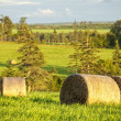 Stock Photo: Pastoral Landscape