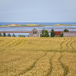 Prince Edward Island Shoreline — Stock Photo