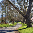 Stanley Park, Vancouver — Stock Photo #9401663