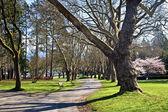Stanley Park, Vancouver — Stock Photo