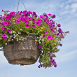 Stock Photo: PetuniHanging Basket