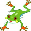 Rainforest Frog - Stock Photo