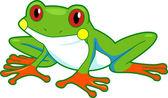 Rainforest Frog — Stock Photo