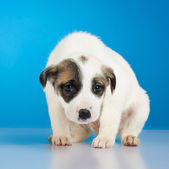 Shy and scared little stray puppy — Stock Photo