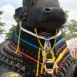 Nandi bull — Stock Photo