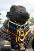 Nandi boğa — Stok fotoğraf