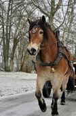 Jazda w zimie — Zdjęcie stockowe