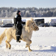 Stock Photo: Icelandic horse race in winter
