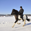 Icelandic horse race in winter — Stok fotoğraf