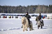 Icelandic horse race in winter — Stock Photo