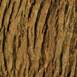 Stock Photo: Textured bark