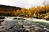 Rivière en automne — Photo