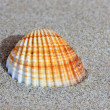 Stock Photo: Seashell on sandy beach