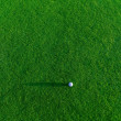 Golf ball on a grass — Stock Photo