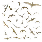 Many seagulls isolated — Stock Photo