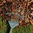 Rake and autumn leaves heap on grass lawn — Stock Photo