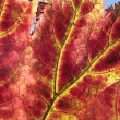 Colorful autumn leaves background — Stockfoto