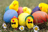 Easter eggs and chicks outdoors in garden — Stock Photo