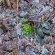 Moss, Leaves and Frost — Stock Photo