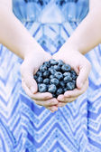Woman Hands Offering Blueberries — Stock Photo