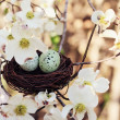 Springtime Eggs and Nest — Stock Photo
