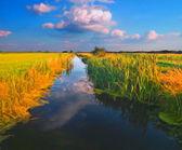 Obraz pejzaż przedstawiający woda czysta rzeka otoczony roślinnością w słoneczny wiosenny dzień — Zdjęcie stockowe