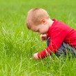 Cute little boy exploring the nature on beautiful spring day - Zdjęcie stockowe