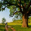 Young traveler with bicycle and camera looking at huge oak beside the country road on sunny spring day — Stock Photo #10463809